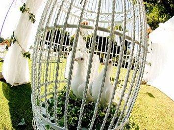 Colonial White Dove Nunta Bucuresti